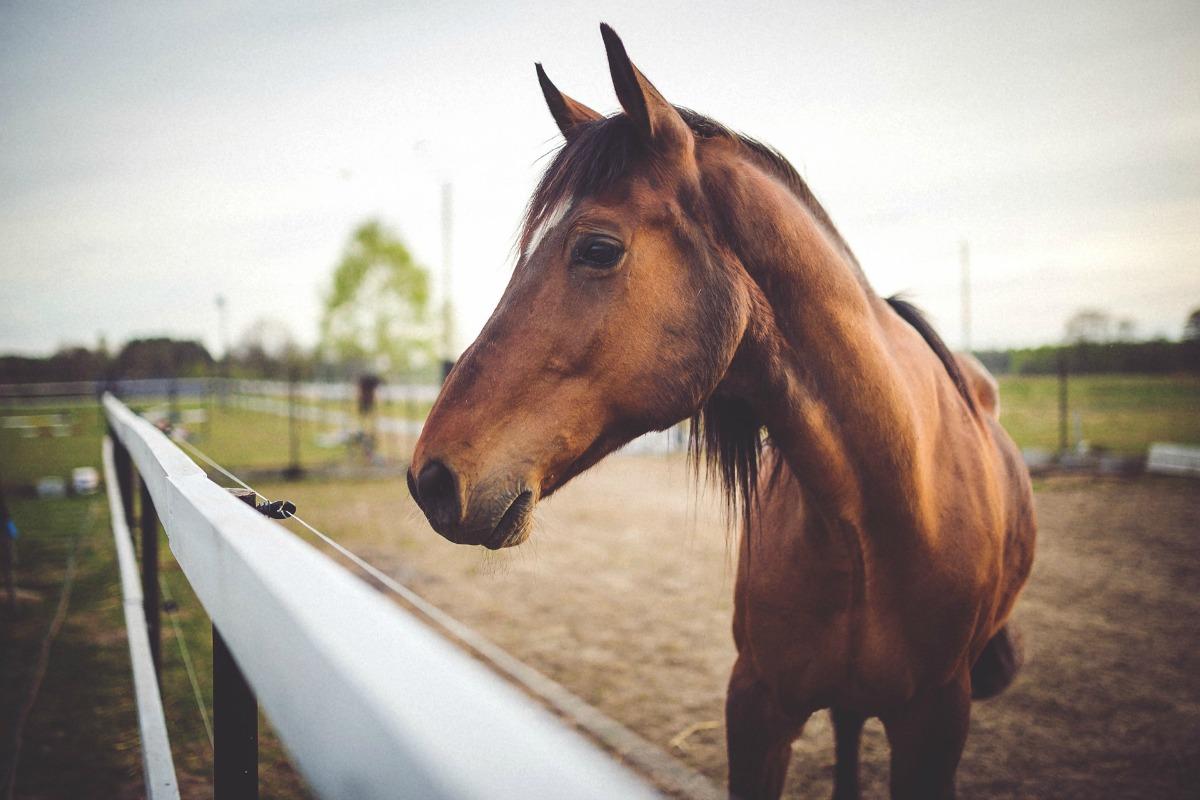 horse-not-zugeschnitten