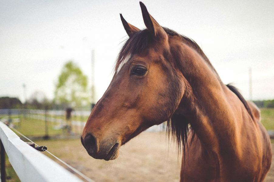 horse-zugeschnitten